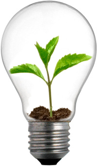 photo of an incandescent light bulb with sprouting plant inside